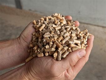 biomassa forestal