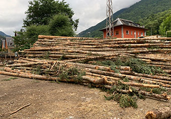 fusta dels boscos